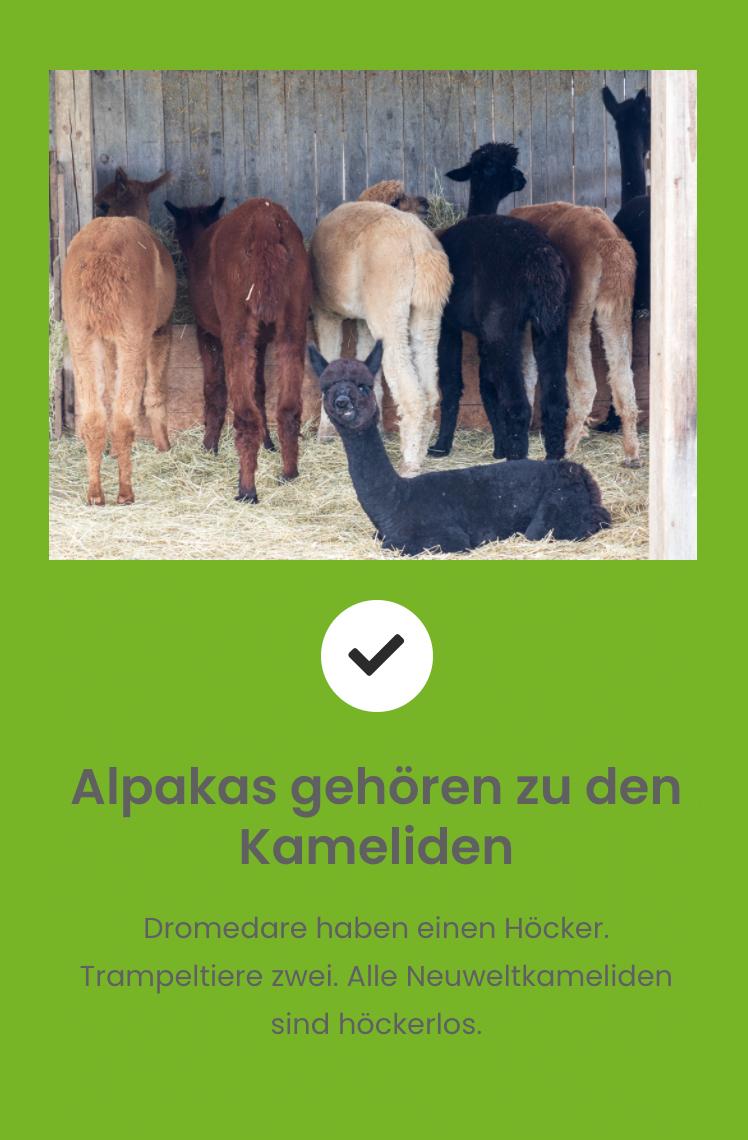 kameliden
